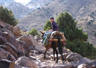 Berber boy on a mule near Imlil in the High Atlas Mountains