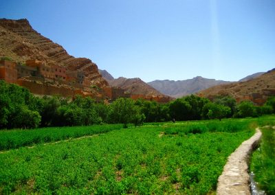 Farmland in the palmeries in Todra Gorge in Morocco