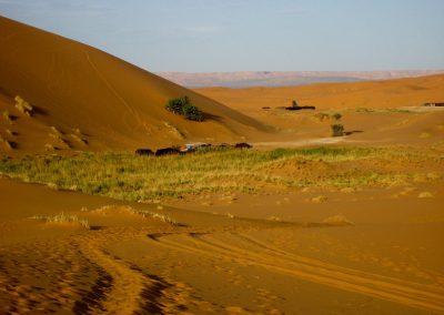 Nomad camps in the Sahara Desert in Morocco
