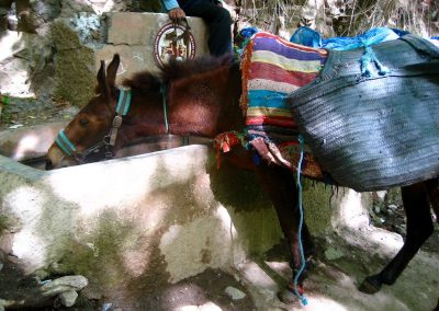 Mule drinking water in Imlil in the High Atlas Mountains in Morocco
