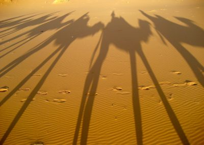 Camels casting shadows on a private guided trek in the Sahara Desert with Experience Morocco