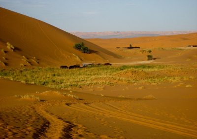 Nomad camps in the Sahara Desert in Morocco