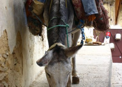 Working donkey in Fes in Morocco